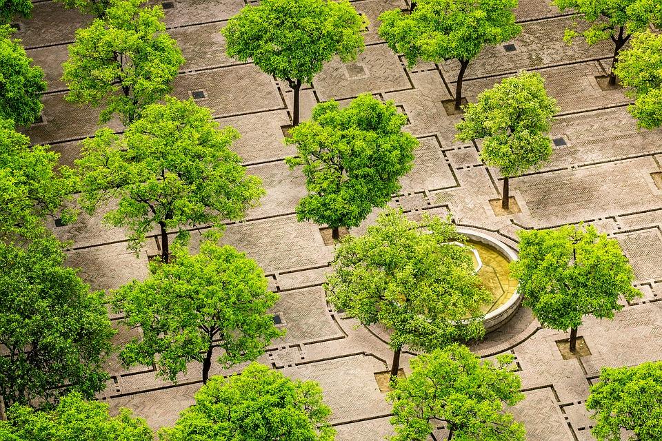 Baum Pixabay CC0